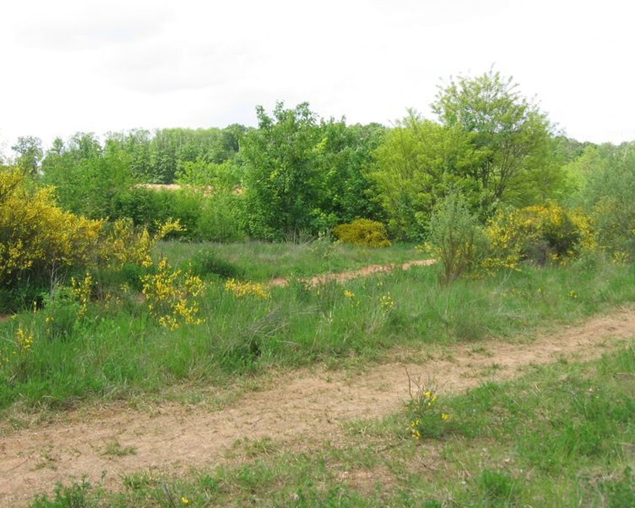 Bois De La Saulx randonnée marche à saulx-les-chartreux: saulx les chartreux