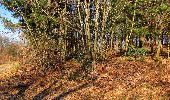 Trail Walk RETHEUIL - en forêt de Retz_76_dans les forêts de Retz et de Compiègne - Photo 137