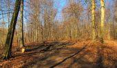 Trail Walk PIERREFONDS - en forêt de Compiègne_24_Tournantes sur le Voliard et sur la Fortelle_chaussée Brunehaut - Photo 50