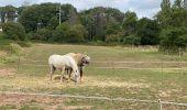 Randonnée Marche Profondeville - Sept Meuse Profondeville  21,4 km - Photo 9