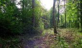Randonnée Marche COYOLLES - en forêt de Retz_78_les rayons du Rond Capitaine - Photo 56