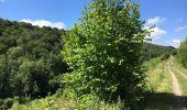 Randonnée Marche Havelange - Bois, Rivière et champs - Photo 20