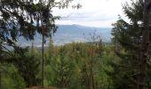 Randonnée Marche RIBEAUVILLE - Le Taennchel à partir du Schelmenkopf - Photo 5