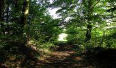 Randonnée Marche HARAMONT - en forêt de Retz_79_08_2019_vers Taillefontaine et Retheuil par les lisières - Photo 20