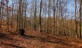 Trail Walk PIERREFONDS - en forêt de Compiègne_24_Tournantes sur le Voliard et sur la Fortelle_chaussée Brunehaut - Photo 66