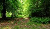 Randonnée Marche COYOLLES - en forêt de Retz_78_les rayons du Rond Capitaine - Photo 11