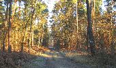 Randonnée Marche SAINT-JEAN-AUX-BOIS - en forêt de Compiègne_19_le Puits d'Antin_les Mares St-Louis_La Muette - Photo 13