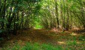 Randonnée Marche SAINT-JEAN-AUX-BOIS - en forêt de Compiègne_6_les Grands Monts_la route tournante sur la tête St-Jean - Photo 143