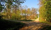Randonnée A pied VILLERS-COTTERETS - le GR11A  dans la Forêt de Retz  - Photo 88
