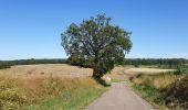 Trail Walk Havelange - De Havelange à Saint Fontaine par le village de Ossogne - Photo 1