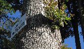 Trail Walk DAMPLEUX - en forêt de Retz_80_sur la Route Tortue et la Route Droite - Photo 144