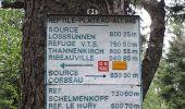 Randonnée Marche RIBEAUVILLE - Le Taennchel à partir du Schelmenkopf - Photo 4