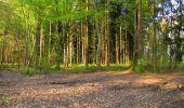 Randonnée A pied VILLERS-COTTERETS - le GR11A  dans la Forêt de Retz  - Photo 130