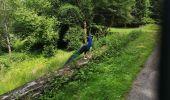 Trail Walk ECROMAGNY - Milles Étangs 18.06.2020 - Photo 7