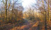 Trail Walk SAINT-JEAN-AUX-BOIS - en forêt de Compiègne_33_12_2019_les Tournantes de l'étang Saint-Jean et des Prés Saint-Jean - Photo 45