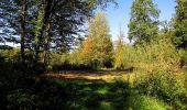 Trail Walk DAMPLEUX - en forêt de Retz_80_sur la Route Tortue et la Route Droite - Photo 305