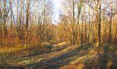 Trail Walk SAINT-JEAN-AUX-BOIS - en forêt de Compiègne_33_12_2019_les Tournantes de l'étang Saint-Jean et des Prés Saint-Jean - Photo 52
