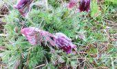 Trail Walk NASBINALS - Aubrac 01 - Photo 1