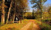 Randonnée A pied VILLERS-COTTERETS - le GR11A  dans la Forêt de Retz  - Photo 145
