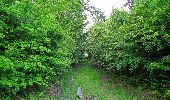 Randonnée Marche COYOLLES - en forêt de Retz_78_les rayons du Rond Capitaine - Photo 80