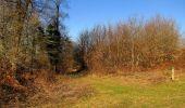 Trail Walk RETHEUIL - en forêt de Retz_76_dans les forêts de Retz et de Compiègne - Photo 132