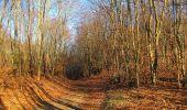 Trail Walk PIERREFONDS - en forêt de Compiègne_24_Tournantes sur le Voliard et sur la Fortelle_chaussée Brunehaut - Photo 10