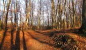 Trail On foot VIEUX-MOULIN - en forêt de Compiègne_23_la Grotte des Ramoneurs_le Mont Berny - Photo 110
