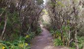 Randonnée Marche Agulo - alto de garajonay - Photo 1
