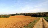 Randonnée A pied VILLERS-COTTERETS - le GR11A  dans la Forêt de Retz  - Photo 160