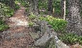 Randonnée Marche MUHLBACH-SUR-BRUCHE - Le Jardin des Fées par la cascade de Soulzbach - Photo 24