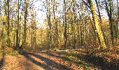 Randonnée A pied VILLERS-COTTERETS - le GR11A  dans la Forêt de Retz  - Photo 108