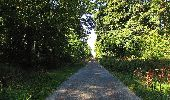Trail Walk DAMPLEUX - en forêt de Retz_80_sur la Route Tortue et la Route Droite - Photo 211