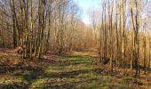 Trail Walk PIERREFONDS - en forêt de Compiègne_24_Tournantes sur le Voliard et sur la Fortelle_chaussée Brunehaut - Photo 62