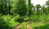Randonnée Marche COYOLLES - en forêt de Retz_78_les rayons du Rond Capitaine - Photo 157