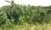 Trail Walk SAINT-JEAN-DES-VIGNES - Le tour des villages des pierres dorées jour 4 - Photo 2
