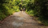 Trail Walk RIVIERE-SALEE - JOUBADIÈRE - MORNE CONSTANT - PAGERIE - Photo 15
