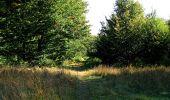 Trail Walk DAMPLEUX - en forêt de Retz_80_sur la Route Tortue et la Route Droite - Photo 179