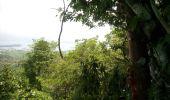 Trail Walk RIVIERE-SALEE - Rivière Salée Pagerie - Photo 5