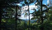 Trail Walk NIEDERBRONN-LES-BAINS - petit wintersberg 6km - Photo 3
