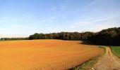 Randonnée A pied VILLERS-COTTERETS - le GR11A  dans la Forêt de Retz  - Photo 158