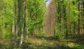 Randonnée Marche LONGPONT - en forêt de Retz_77_Longpont_Puiseux en Retz_AR - Photo 11