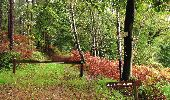 Randonnée A pied VILLERS-COTTERETS - le GR11A  dans la Forêt de Retz  - Photo 79