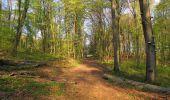 Randonnée A pied VILLERS-COTTERETS - le GR11A  dans la Forêt de Retz  - Photo 98