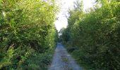 Trail Walk DAMPLEUX - en forêt de Retz_80_sur la Route Tortue et la Route Droite - Photo 123