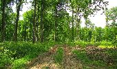 Randonnée Marche COYOLLES - en forêt de Retz_78_les rayons du Rond Capitaine - Photo 19