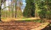 Randonnée A pied VILLERS-COTTERETS - le GR11A  dans la Forêt de Retz  - Photo 124