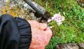 Trail Walk NASBINALS - Aubrac 01 - Photo 5