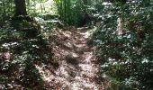 Randonnée Marche Namur - Bois marche les dames et abbaye - Photo 2