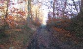 Trail Walk SAINT-JEAN-AUX-BOIS - en forêt de Compiègne_33_12_2019_les Tournantes de l'étang Saint-Jean et des Prés Saint-Jean - Photo 202