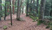Randonnée Marche NIEDERBRUCK - niederbruck lochberg circuit - Photo 3